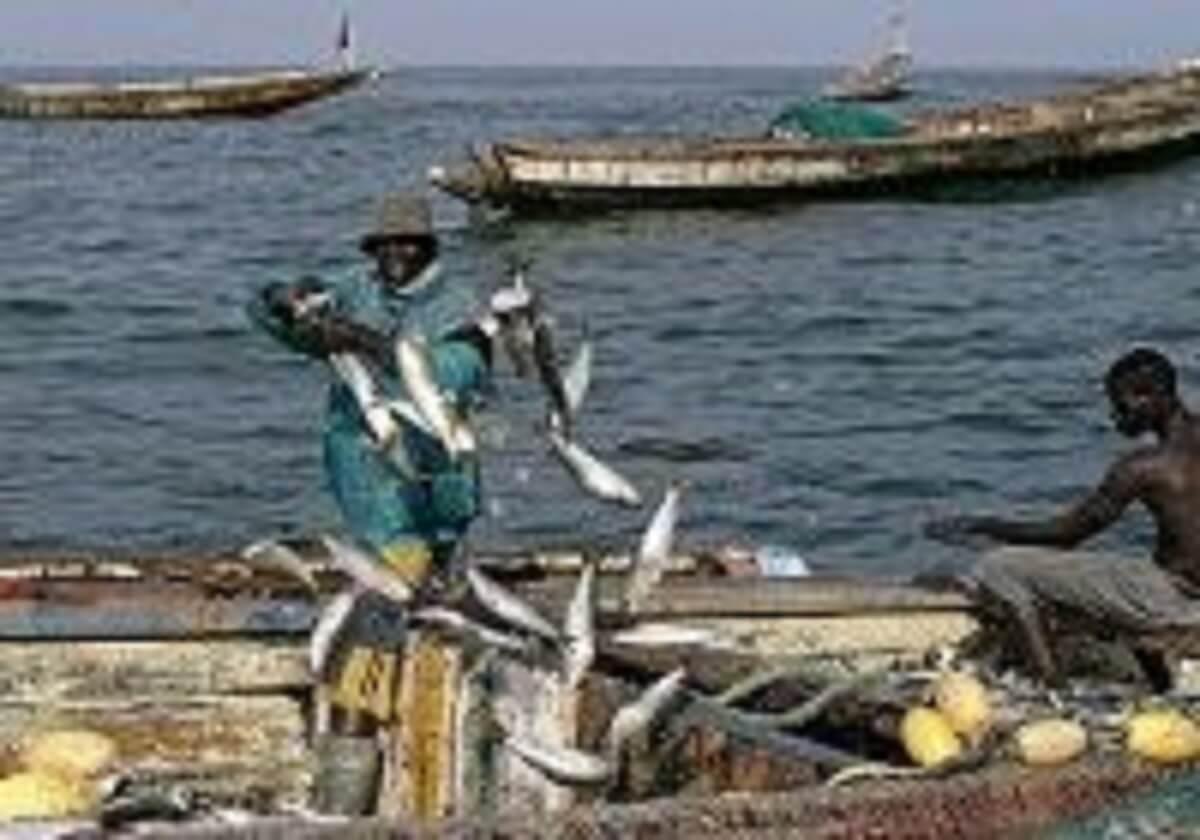 Les poissons du Sénégal