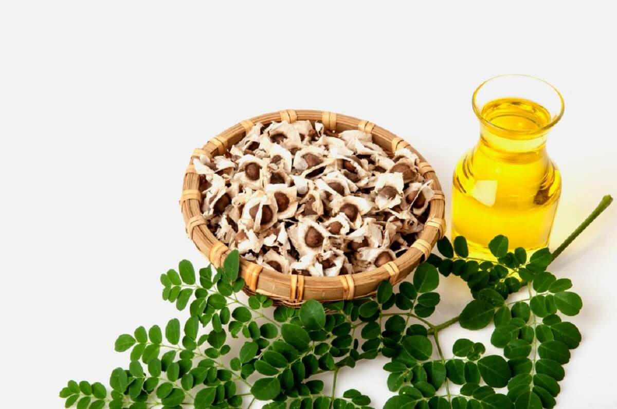 moringa-graine-et-huile