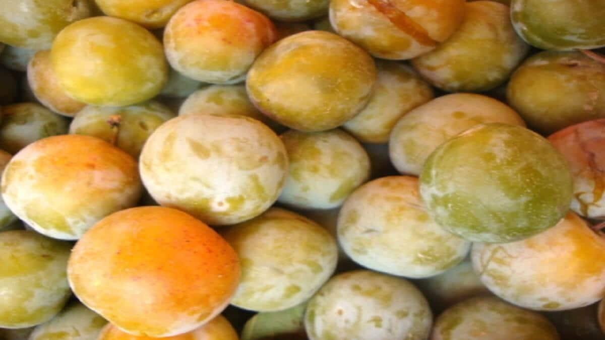 prune-reine-claude